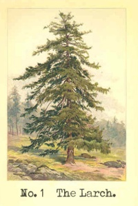 No. 1 The Larch